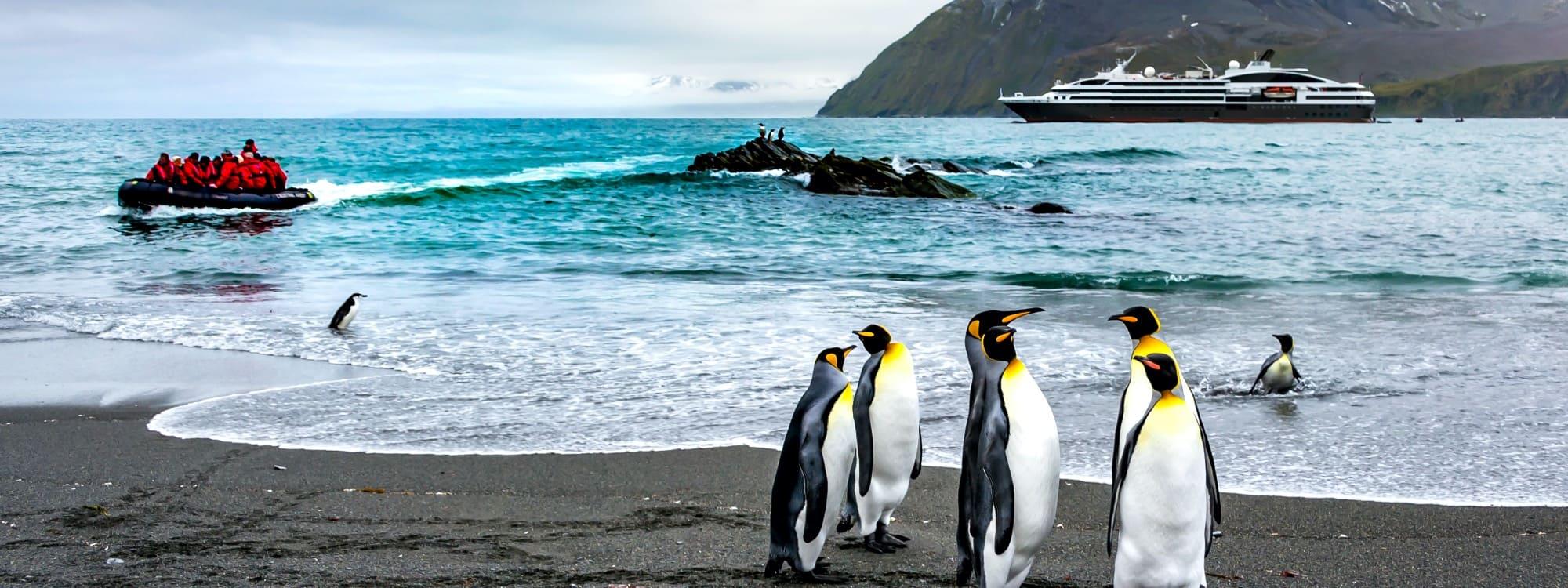 Pinguine bestaunen Ponant-Passagiere im Zodiac